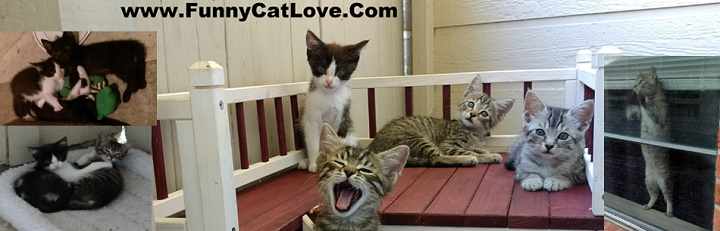 www funnycat love funny cat videos funny cat images of cats in love